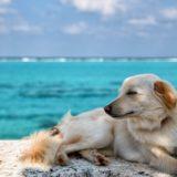 【文献】犬を飼うと心血管イベントの予後がよくなる(ビジアブ付き)